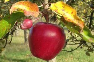 Herbstrundgang der jungen LandFrauen in Unterriexingen